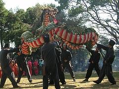 角上蛇踊01-5