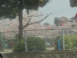 桜01-2