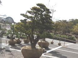 稲佐山01-8