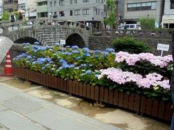 紫陽花まつり03-5