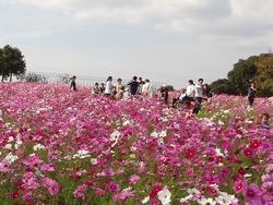 あぐりの丘03-3