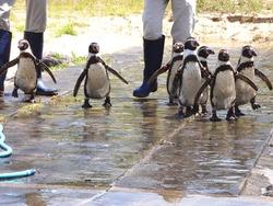 ペンギン水族館04-7