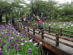 花菖蒲まつり02-3