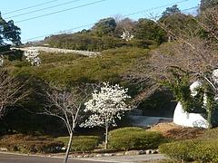 桜03-4