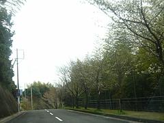 桜0318・03