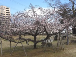 諫早公園01-4