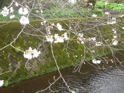 桜02-5