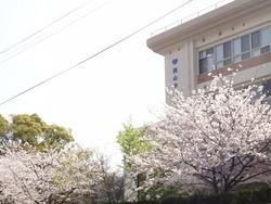 桜01-3