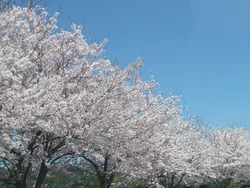 伊佐ノ浦公園03-4