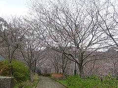 桜0318・05-2