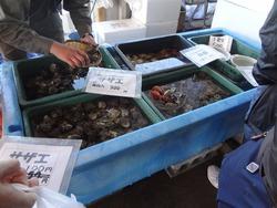 海鮮祭り03-4