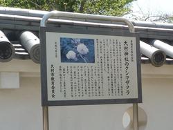 大村公園02-3