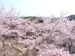 琴海中央公園03-2
