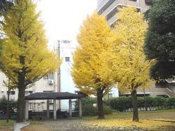 中町公園02