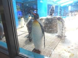 ペンギン水族館03-9