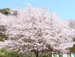 琴海中央公園01-4