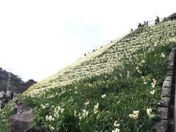 水仙まつり01-2-2