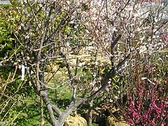 グリーン2011-03-4