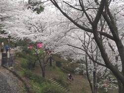 中尾城公園02-5