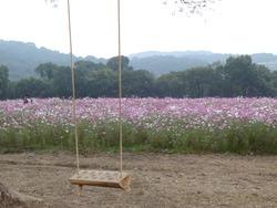 芝桜公園02-4