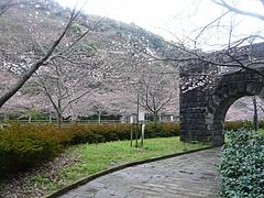 桜0318・05-8