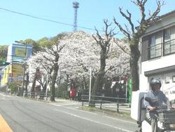 新戸町01