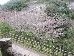 桜0318・05