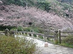 桜0318・05-1