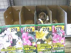 コメリ時津店01