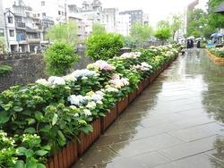 紫陽花まつり02