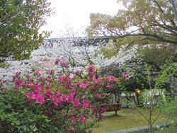 桜町公園02