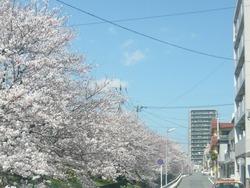 桜07-2