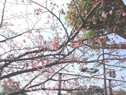 久原公園01-8