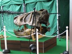 恐竜展01-4