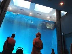 ペンギン水族館03-4