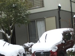 雪01-3