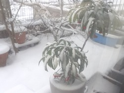 雪03-3