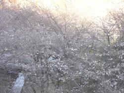 芒塚01-2