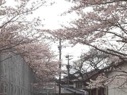 小ヶ倉水園01-3