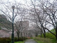 桜0318・05-5