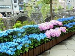 紫陽花まつり02-8
