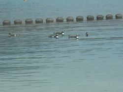 ペンギン水族館02-7