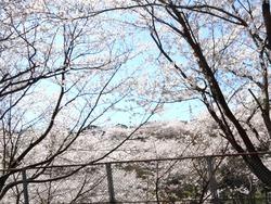 三川公園01-1
