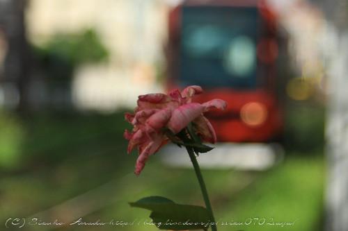 blog-8870