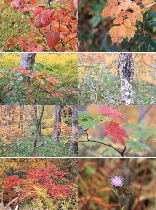 33-尾瀬の秋色