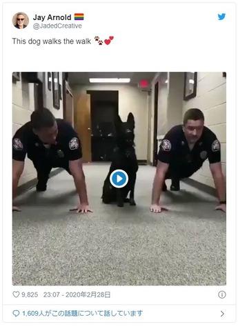 警官と一緒に腕立てをする犬がアホカワイイ