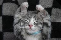 笑いながら寝る猫