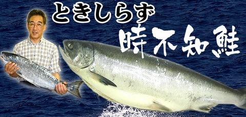 toki_wide_01