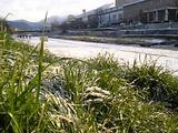 高野川雪景色.jpg