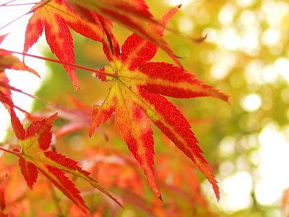 色付き始めた紅葉たち
